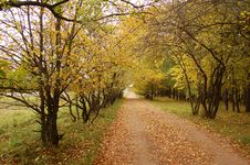 Free Autumn Avenue Stock Photos - 6582403