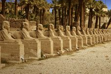 Free Luxor Temple In Egypt Stock Photo - 6582650