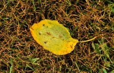 Free Fall Leaves Royalty Free Stock Photo - 6584625