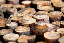 Free Trunks Of Trees Stock Photos - 6587503