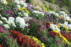 Free Flower Land Stock Photography - 6587512