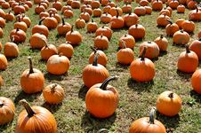 Free Pumpkins Stock Photography - 6587662