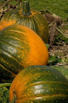 Free Pumkins Royalty Free Stock Photography - 6587817