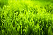 Free Grass Royalty Free Stock Photo - 6588275