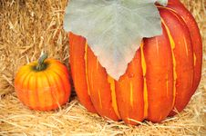 Free Pumpkins Stock Photography - 6588472