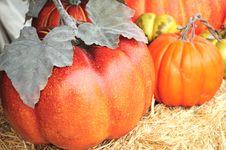 Free Pumpkins Royalty Free Stock Photos - 6588758