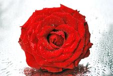 Free Red Rose Royalty Free Stock Images - 6588879