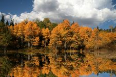 Free Fall Reflections Stock Photos - 6591233