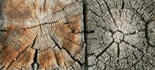 Free Double Weathered Wood Grain Royalty Free Stock Photo - 6591445