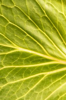 Free Leaf Close-up Royalty Free Stock Photos - 6591758