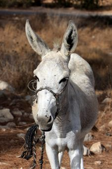Donkey Standing Portait Royalty Free Stock Images