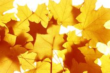 Free Autumn Leaves Background Royalty Free Stock Images - 6592449