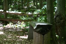 Free Forest Bench Stock Images - 6592554