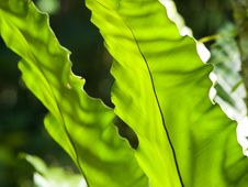 Free Dappled Fronds Royalty Free Stock Photos - 6592598