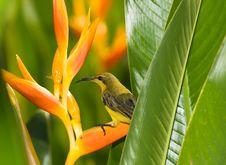 Free Bird In Bush Royalty Free Stock Photos - 6592768