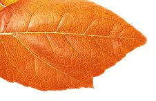 Free Autumn Leaf Stock Image - 6592831