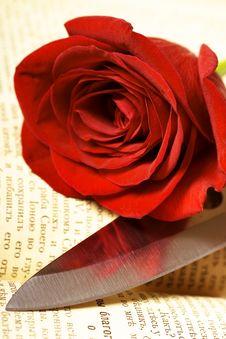 Free Beautiful Rose On Book Royalty Free Stock Images - 6592899