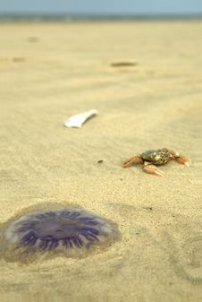 Free Jellyfish And Crab Royalty Free Stock Photography - 6592917