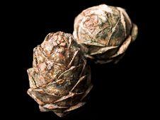 Free Pine Cones Stock Photos - 6593383