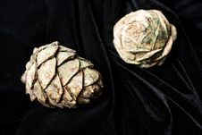 Free Pine Cones Royalty Free Stock Image - 6593386