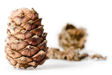 Free Pine Cones Stock Photo - 6593390