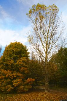 Free Two Trees Showing The Variety Nature Stock Images - 6593484
