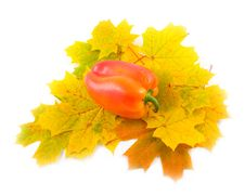 Free Red  Pepper Royalty Free Stock Photos - 6594008