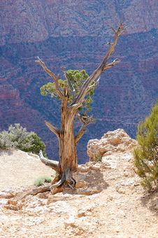 Free Grand Canyon Sentinal Royalty Free Stock Photography - 6594047