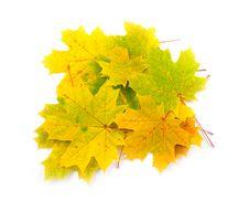 Free Yellow Fallen Stock Photo - 6594070