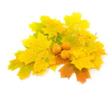 Free Yellow Tasty Plum Stock Photography - 6594072