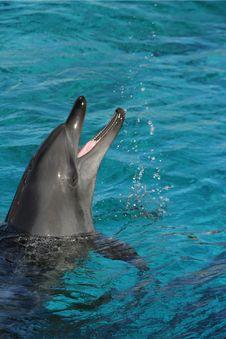 Free Dolphin Splashing Water Royalty Free Stock Images - 6594549