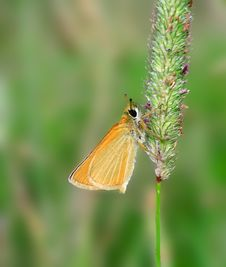 Free Butterfly On The Grass. Royalty Free Stock Photos - 6594618