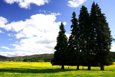 Free Pure Sky, Pure Meadow (2) Royalty Free Stock Photos - 6594638