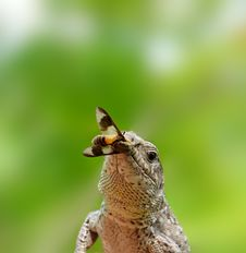Lizard To Fly. Royalty Free Stock Photos