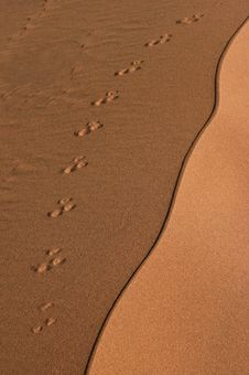 Free Traces On The Sand Dune. Royalty Free Stock Photography - 6594997