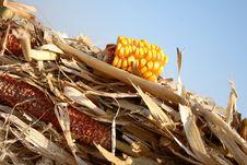 Free Grain Stock Image - 6595471