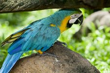 Free Splendid Parrot In The Wilderness Stock Photos - 6596053