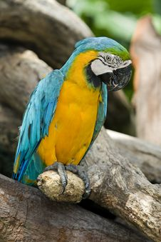 Free Splendid Parrot In The Wilderness Royalty Free Stock Photo - 6596065