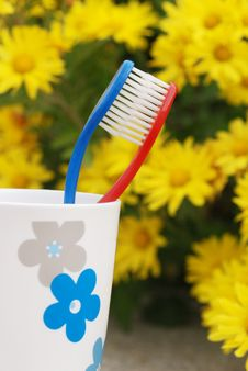 Free Toothbrush Royalty Free Stock Photo - 6596095