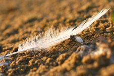 Feather On Sand Stock Photos