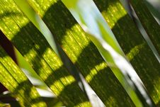 Free Light And Shadow On Leaf Stock Photo - 6597620