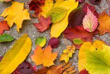 Free Autumn Herbarium Stock Photography - 6598252