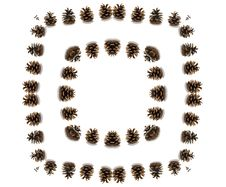 Free Pine Cones Circle Stock Images - 6598974