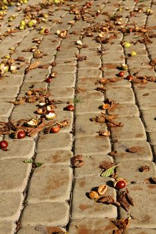 Chestnuts On A Pavement Royalty Free Stock Image