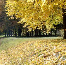 Free Mellow Autumn Royalty Free Stock Images - 6599799