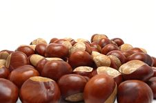 Free Conkers Stock Images - 6599944