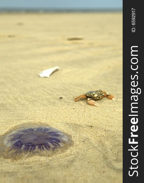 Jellyfish and crab