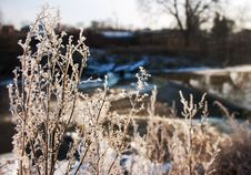 Frost On The Grass In The Winter Royalty Free Stock Photos