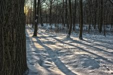 Winter Forest At Sunset Royalty Free Stock Photo