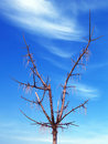 Free Tree Against Blue Sky Stock Photography - 666852